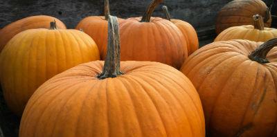 Quels titres faut-il lire sur NetGalley à l'approche d'Halloween ?